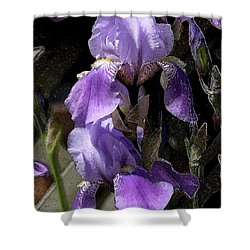 Chris' Garden - Iris 4 Shower Curtain by Stuart Turnbull