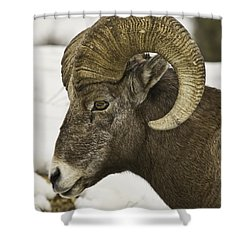 Christmas Big Horn Shower Curtain