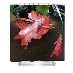 Christmas Cactus Bloom Shower Curtain