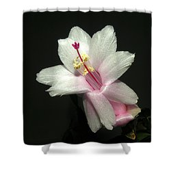 Christmas Cactus Shower Curtain by Brian Chase
