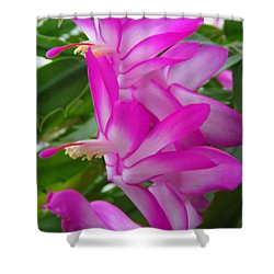 Christmas Cactus Flower Shower Curtain by Aimee L Maher Photography and Art Visit ALMGallerydotcom