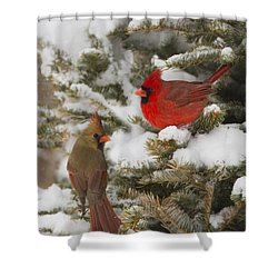Christmas Card With Cardinals Shower Curtain by Mircea Costina Photography