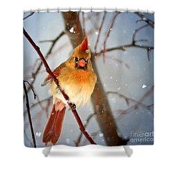 Northern Cardinal Snow Scene Shower Curtain