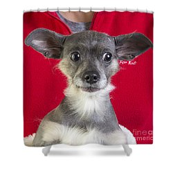 Christmas Dog Shower Curtain by Edward Fielding