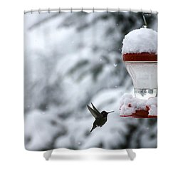 Shower Curtain featuring the photograph Christmas Hummingbird by Katie Wing Vigil