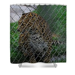 Christmas Leopard I Shower Curtain
