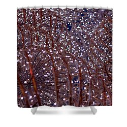 Christmas Lights Shower Curtain by Valentino Visentini