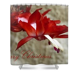 Christmas Red Beauty Card Shower Curtain