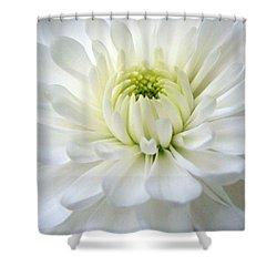 Chrysanthemum 1 Shower Curtain