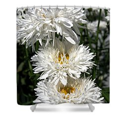 Shower Curtain featuring the photograph Chrysanthemum Named Crazy Daisy by J McCombie