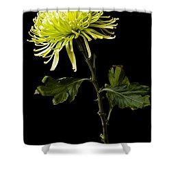 Shower Curtain featuring the photograph Chrysanthemum by Sennie Pierson