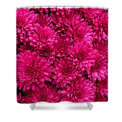 Chrysantheumums Shower Curtain