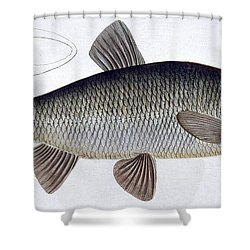 Chub Shower Curtain by Andreas Ludwig Kruger