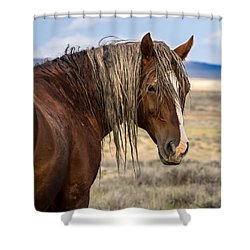 Cimarron - Wild Mustang Stallion Shower Curtain