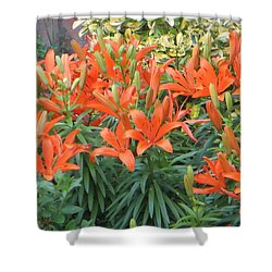 Cincture Of Lilies Shower Curtain by Sonali Gangane