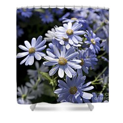 Cineraria 1225 Shower Curtain by Terri Winkler
