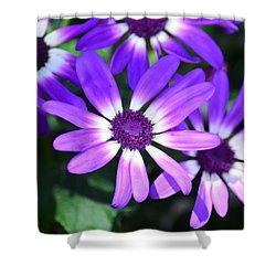 Cineraria Shower Curtain by Maria Urso