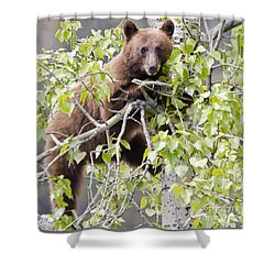 Cinnamon Beauty Shower Curtain by Dee Cresswell