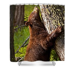 Shower Curtain featuring the photograph Cinnamon Boar Black Bear by J L Woody Wooden