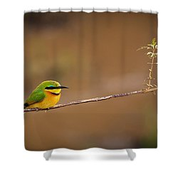 Cinnamon-chested Bee-eater Shower Curtain by Adam Romanowicz
