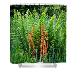 Cinnamon Fern Shower Curtain by Bill Wakeley