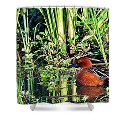 Cinnamon Teal And Dragonfly Shower Curtain
