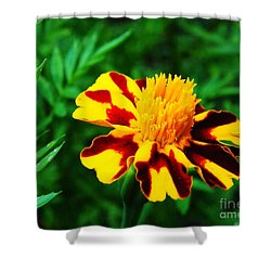 Circus Circus Marigold Shower Curtain