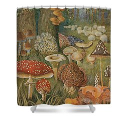 Citizens Of The Land Of Mushrooms Shower Curtain by Science Source
