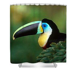 Citron-throated Toucan Shower Curtain by Art Wolfe