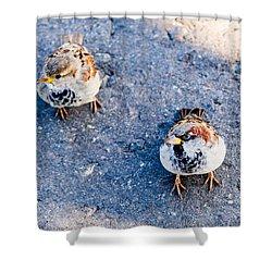 City Beggars - Featured 3 Shower Curtain by Alexander Senin