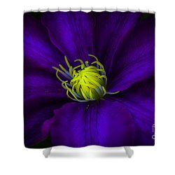 Clamatis Shower Curtain