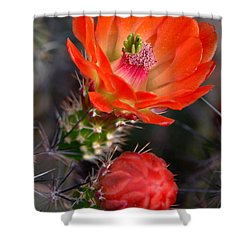 Claret Cup Cactus Shower Curtain