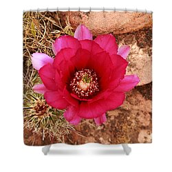 Shower Curtain featuring the photograph Claret Cup Cactus On Red Rock In Sedona by Alan Vance Ley