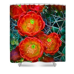 Claret Cup Shower Curtain by Inge Johnsson