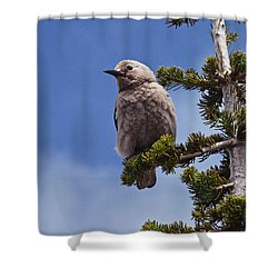 Clark's Nutcracker In A Fir Tree Shower Curtain