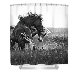 Clash Of Two Wild Stallions Shower Curtain