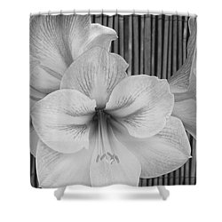 Classic Lilies Shower Curtain by Greg Patzer