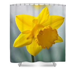 Classic Spring Daffodil Shower Curtain by Terence Davis