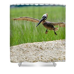 Shower Curtain featuring the photograph Clear For Landing by Steven Santamour