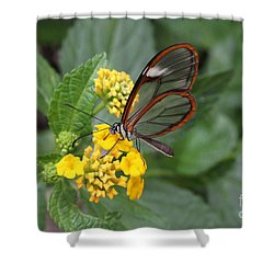 Clearwing Butterfly Shower Curtain