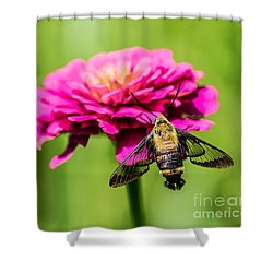 Clearwing Moth Shower Curtain by Debbie Green