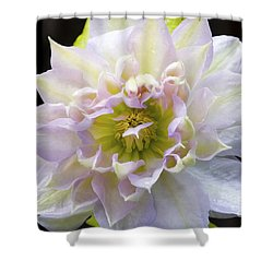 Clematis 'belle Of Woking' Shower Curtain