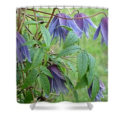 Shower Curtain featuring the photograph Clematis  by Katy Mei