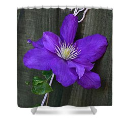 Clematis On A String Shower Curtain