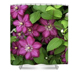 Clematis Shower Curtain by Penny Lisowski