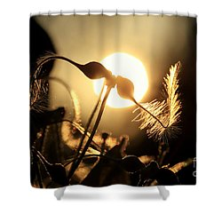Clematis - Sunset Shower Curtain