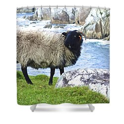 Clew Bay Sheep Shower Curtain