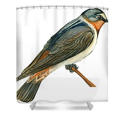 Cliff Swallow  Shower Curtain by Anonymous