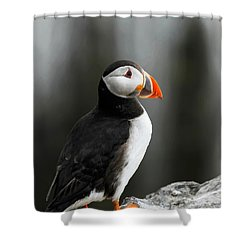 Cliff Top Puffin Shower Curtain