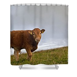 Cliffs Of Moher Brown Cow Shower Curtain